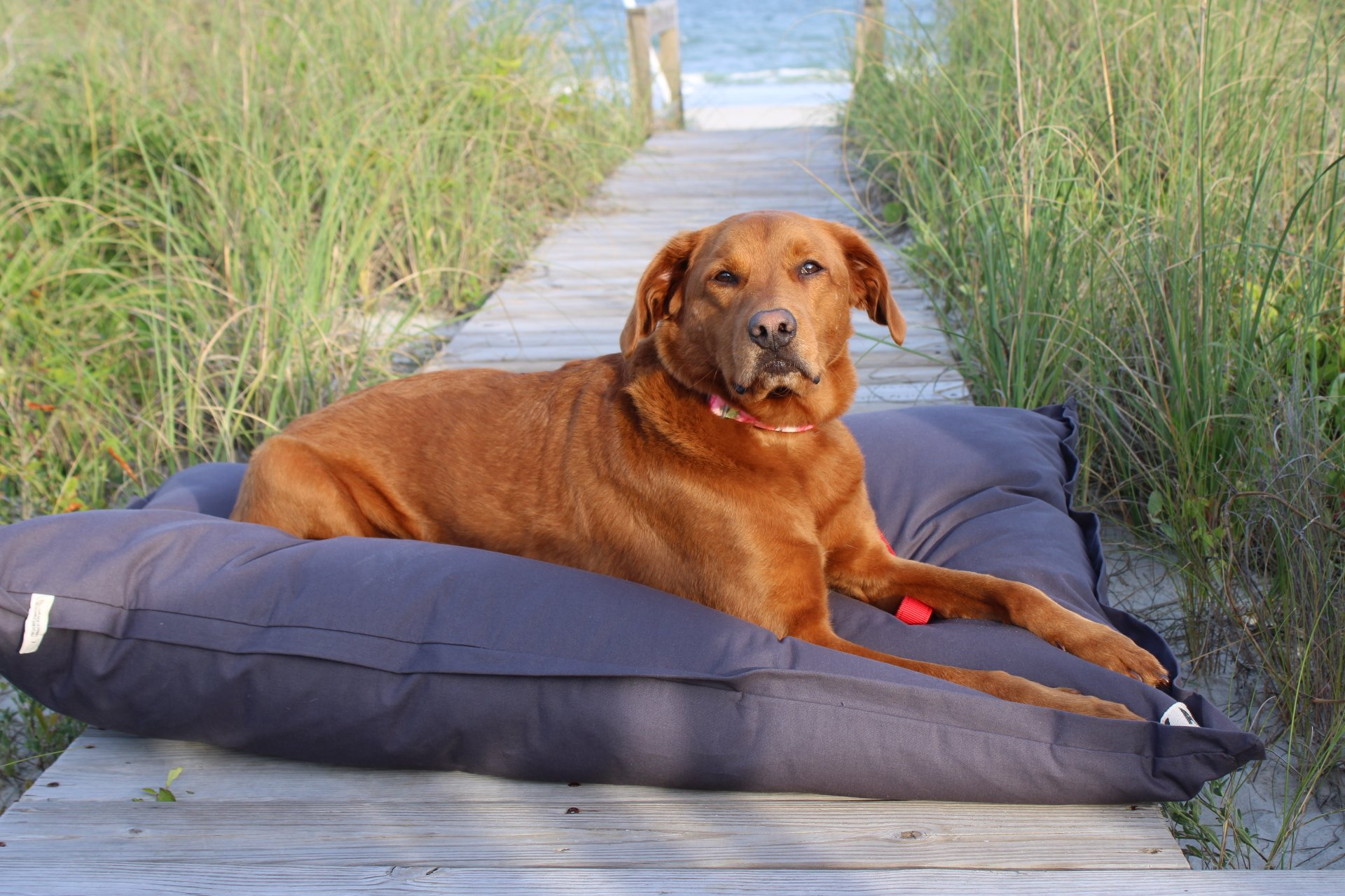 Home Ultra Plush Pillow Dog Bed